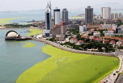 p28 Green tide- Qingdao